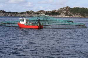 Norwegian salmon farm Photo: Tor-Eddie Fossbakk/ACG